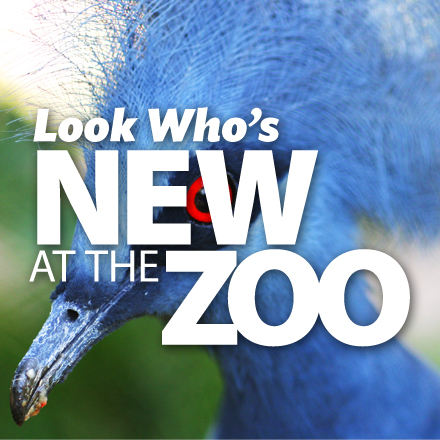 Online Advertising for Sedgwick County Zoo